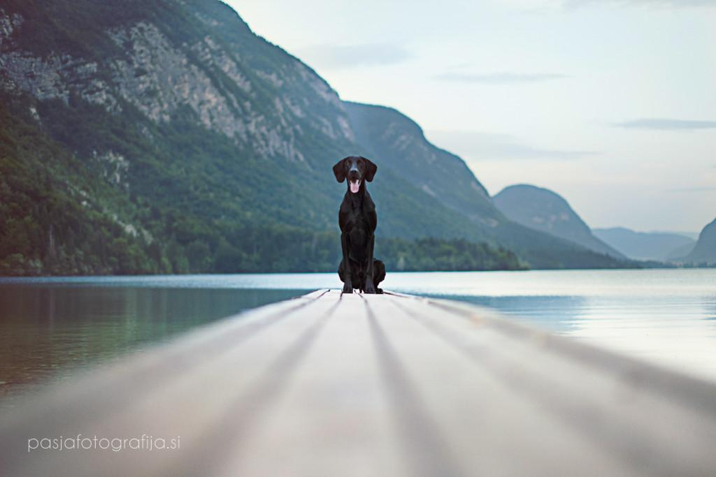 best of dog photography katja jemec