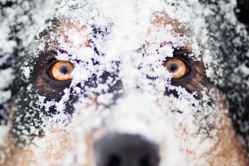 20 Best of Dog Photography